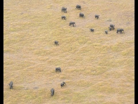 Project aims to count Africa's shrinking elephant population