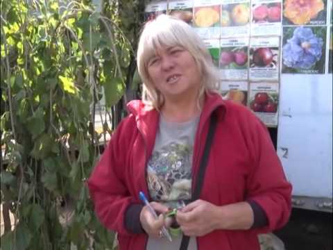 Выставка – ярмарка «Дачный сезон»  в городе Ростове-на-Дону