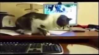 Кошки воюют с техникой, сидят в засаде и другие приколы! Очень смешно! Funny Cat Video