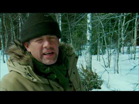 Kings Of The Wild | SE01E05 | Finland - Arctic Circle