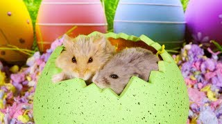 Happy Hamster Easter by AprilsAnimals