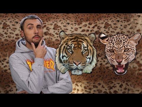 +100500 - Как Выжить При Встрече с Леопардом и Тигром (видео)