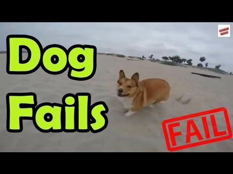 le stravaganti disavventure dei cani!
