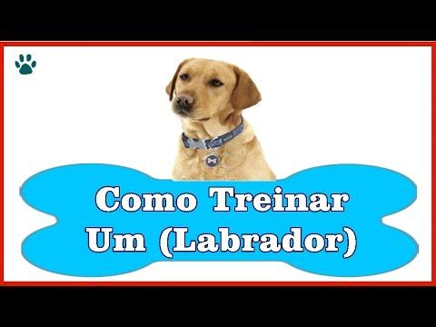 Video Como Treinar um Labrador - Aprenda a Como Treinar um Cachorro Labrador download in MP3, 3GP, MP4, WEBM, AVI, FLV January 2017