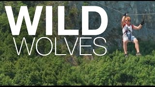 Omis Croatia  City new picture : Wild Wolves // Escape to Omis, Croatia
