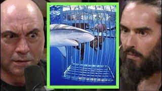 Russell Brand Swam with Sharks!! | Joe Rogan