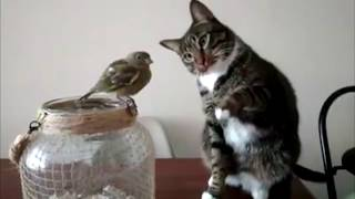 Gato y pájaro - Cat & Bird