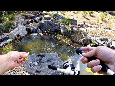 Micro Fishing for a New Pet Crappie!! - Thời lượng: 10 phút.