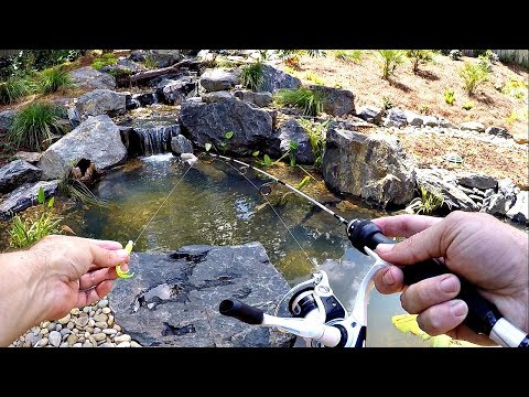 Video Micro Fishing for a New Pet Crappie!! download in MP3, 3GP, MP4, WEBM, AVI, FLV January 2017