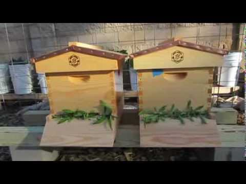 How to Split A Beehive and Prevent Swarming