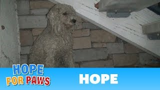 TBT: Homeless poodle needed help, but was too scared to ask.  Watch the amazing transformation :-) by Hope For Paws