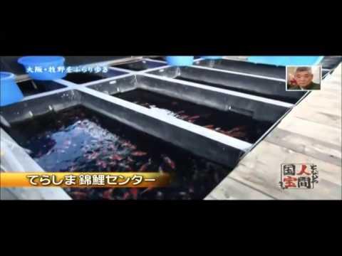 てらしま錦鯉センター となりの魚国宝さん?