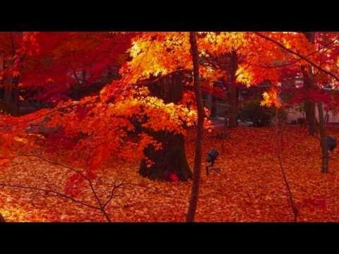 「[京都]秋が深まった美しい京都の紅葉を撮影したフォトムービー。」のイメージ