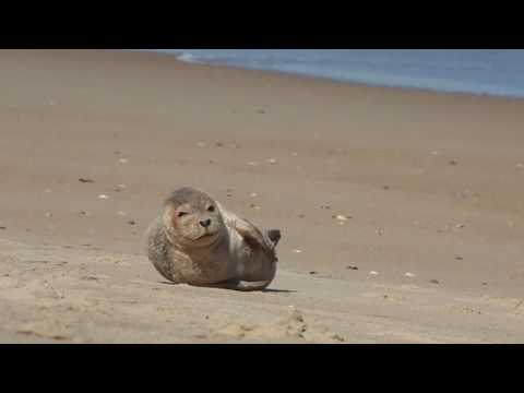 Adorable Baby Seal Pup Soaks up Sun on Outer