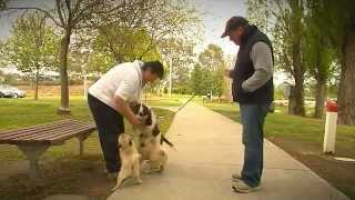 ADVANCE Puppy Care - Introductions To Other Dogs