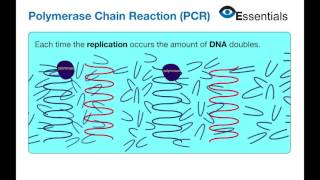 Essentials Video Animation - Polymerase Chain Reaction