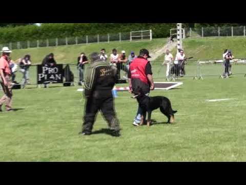 Beauceron Nationale  d' Elevage 2009. Ring 3. 2 partie