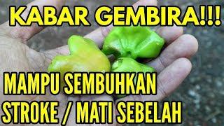 Download Video KABAR GEMBIRA NIH!! ternyata Stroke dapat disembuhkan denga buah ini || Sehat Luar Biasa MP3 3GP MP4