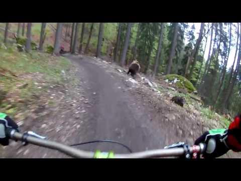 Mountain Biker Narrowly Avoids Getting Mauled by a Bear (видео)