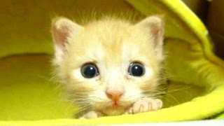 Cute Kittens Compilation || NEW HD