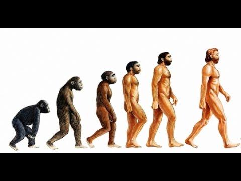 Doku - Die Evolution der Menschen | So entstanden die Menschen