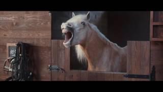 Koń by się uśmiał! Zajebista reklama Volkswagena po której można płakać ze śmiechu :D