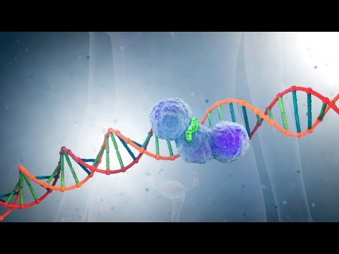 PARP-inhibitors: A New Generation of Cancer Drugs