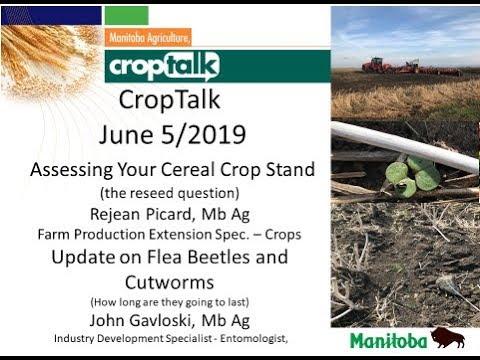 Manitoba pest update