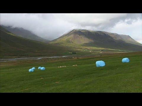 Dürre: Island exportiert Heu nach Norwegen