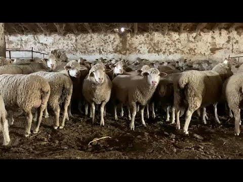 #EUroadtrip: 7η μέρα – Oι αγρότες της Ισπανίας