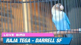 Video Raja Tega Sabet 2 Kali Juara 1 Love Bird Piala DANKODIKLAT TNI MP3, 3GP, MP4, WEBM, AVI, FLV Juni 2018