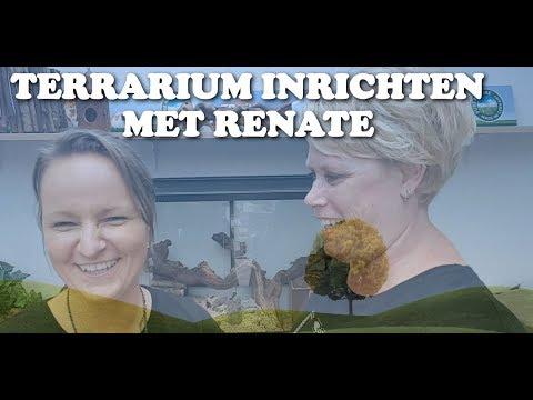 Hamster Terrarium inrichten met Renate_Terrárium, Vivárium. Heti legjobbak