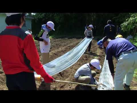 種子島の学校活動:安納小学校サトウキビ植え付け学習体験