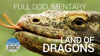 Documentary. Komodo Dragon