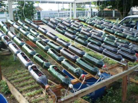 Sistema Caseiro de Fertirrigação em Garrafas Pet