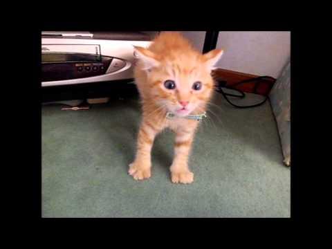 小小貓咪們第一次看到大貓咪 好像看到鬼!
