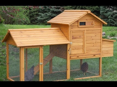 Top 10 Chicken Coops   hayneedle.com