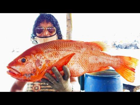 RED EMPEROR FISH CUTTING | FISH CUTTING SKILLS видео