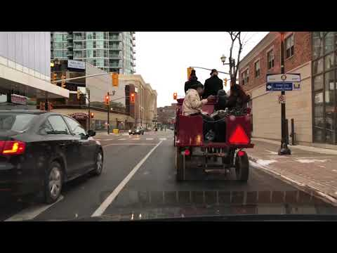 🎠Horse Ride around Brampton Downtown - ❄️ 'Tis the Season in Canada
