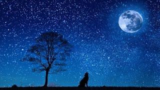 Sonidos de la Naturaleza para Dormir - Sonidos Relajantes para Dormir Profundamente - Sonido Grillos full download video download mp3 download music download