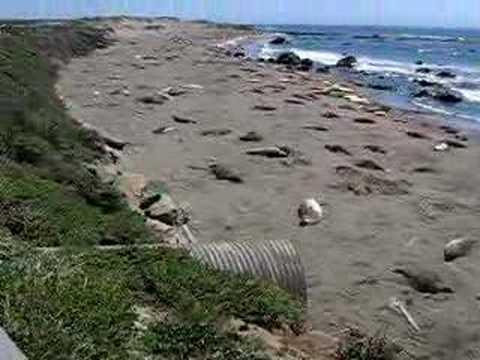 Fókák a parton