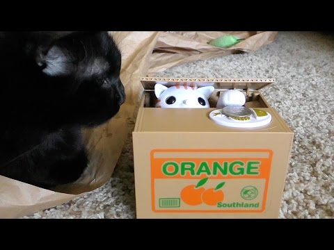 Cats React To Japanese Cat Piggy Bank