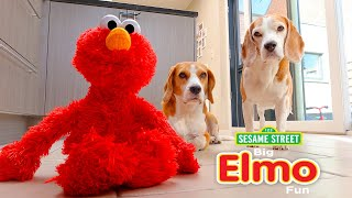 Dogs Vs ELMO Prank : Funny Dogs Louie and Marie