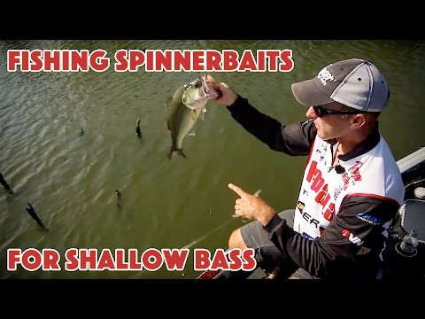 Fishing Shallow Cover for Bass with Spinnerbaits
