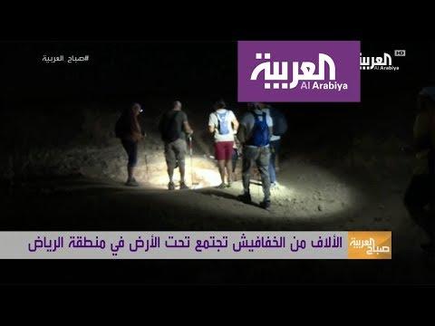 العرب اليوم - بالفيديو: خفافيش في الرياض