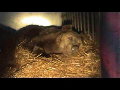 Sechs Braunbären spurlos verschwunden - wir bitten um Mithilfe