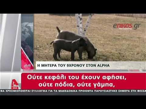 Video - Σέρρες: 9χρονο αγοράκι δέχθηκε επίθεση από τρία σκυλιά