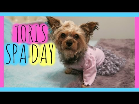 SPECIAL SPA DAY FOR MY YORKIE