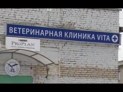 В Западном районе областного центра открылся филиал городской ветеринарной станции