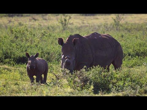 Η WWF εκπέμπει SOS για τα άγρια ζώα και τη φύση